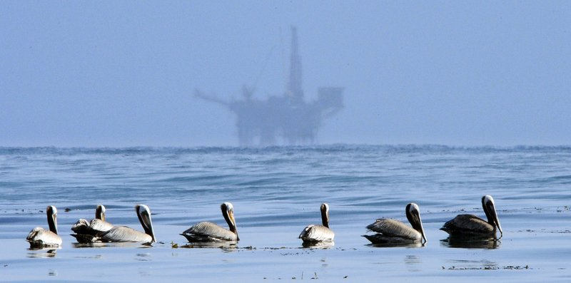 Pelicans and oil drilling